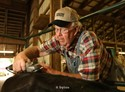 09Septembert2011 Glen Berens of Shelbyville trims the back of one of his dairy cows to prepare it for judging on the opening day of the Allegan County Fair Friday.  (Special to the Gazette / John A. Lacko)
